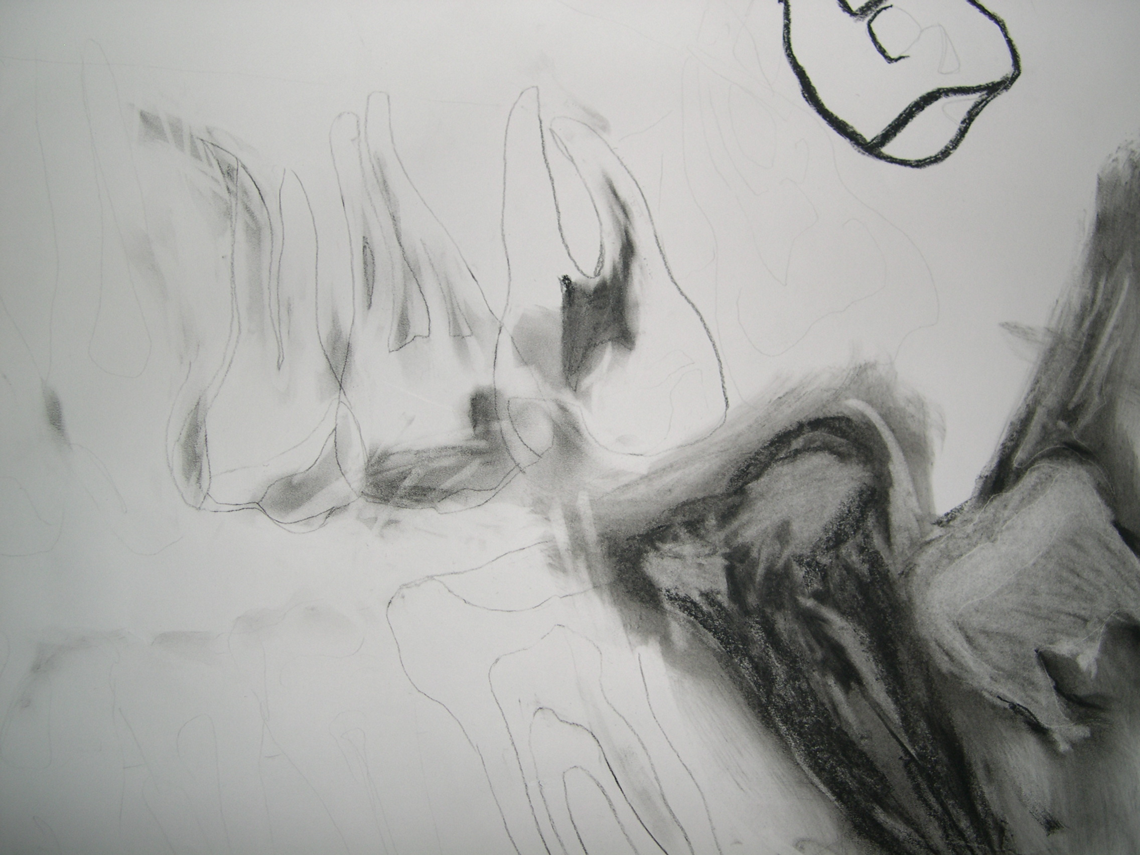 Detail - Four Wisdoms - Drawing of Xray of full set of teeth - Charcoal on paper